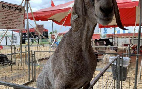 FCCLA Goes to the Fair