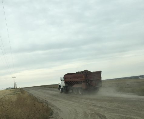 Potatoes being hauled from the field.