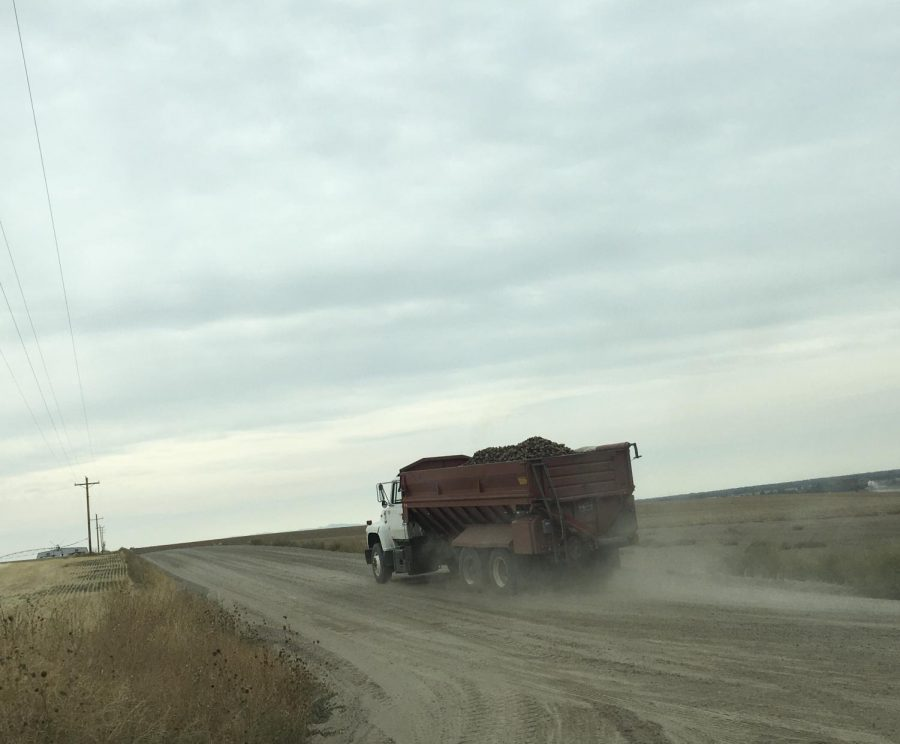 Potatoes+being+hauled+from+the+field.+